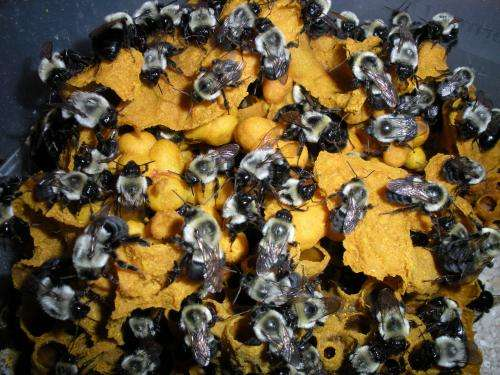Bees from the inside out