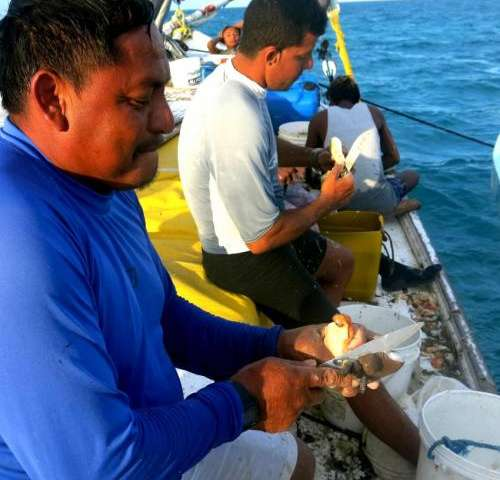 Belize's lobster, conch, and fish populations rebuild in no-take zones