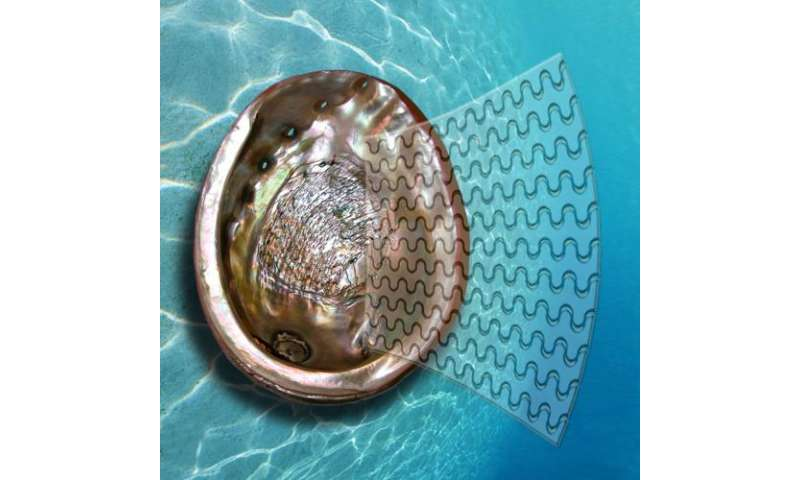 Mollusc shells inspire super-glass