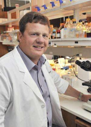 Blocking key enzyme minimizes stroke injury, UT Southwestern research finds