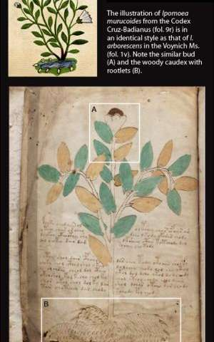 Botanists suggest Voynich illustrations similar to plants in Mexico