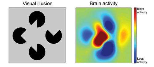 Brain fills gaps to produce a likely picture