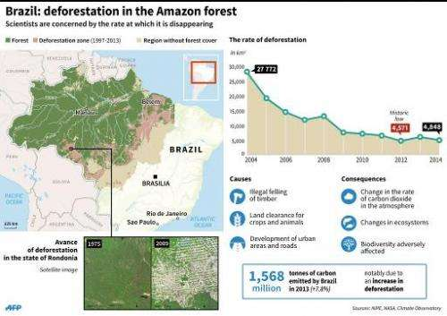 Brazil: deforestation in the Amazon forest