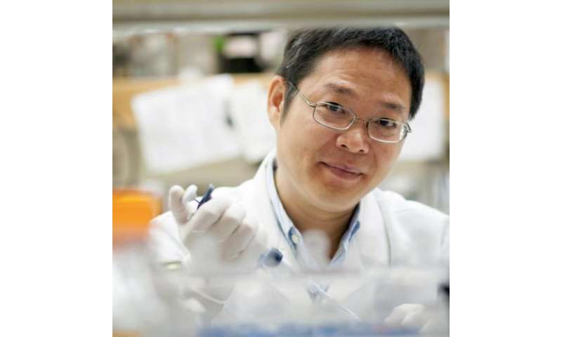 Cell signaling pathway linked to obesity, Type 2 diabetes