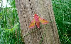 Changes in farming and climate hurting British moths