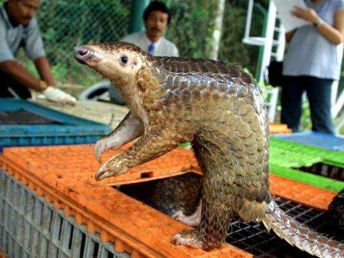 China's demand for pangolin meat and scales is decimating populations in South East Asia