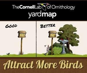 Citizen science boosts bird conservation