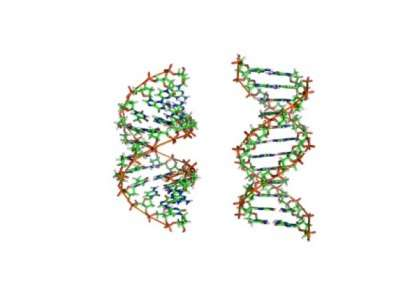 'Clever' DNA may help bacteria survive