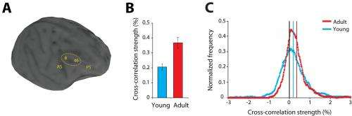 Childhood's end: ADHD, autism and schizophrenia tied to stronger inhibitory interactions in adolescent prefrontal cortex