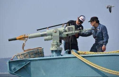 Crew of a whaling ship check a whaling gun or harpoon before departure at Ayukawa port in Ishinomaki City on April 26, 2014