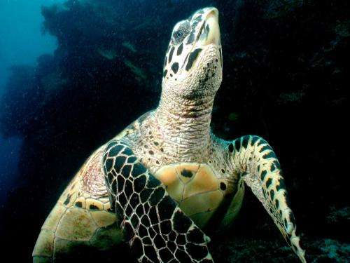 Critically endangered turtle makes surprise appearance