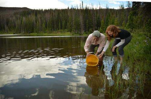 CU-Boulder study paved way for stocking state's 'true' greenback cutthroat into wild