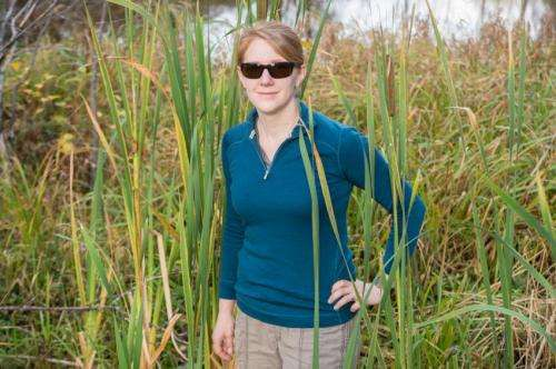Dartmouth study finds restoring wetlands can lessen soil sinkage, greenhouse gas emissions