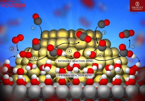 Decoding the role of water in gold nanocatalysis