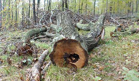 Decomposing logs show local factors undervalued in climate change predictions