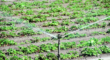 Determining the sustainability of water, agriculture in Arizona
