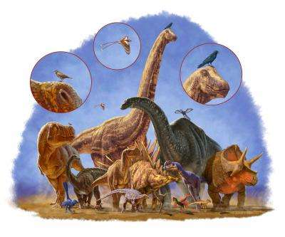The incredible shrinking dinosaur