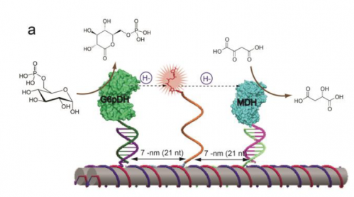 DNA nanotechnology places enzyme catalysis within an arm's length
