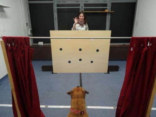 Dogs follow human voice direction to find hidden food
