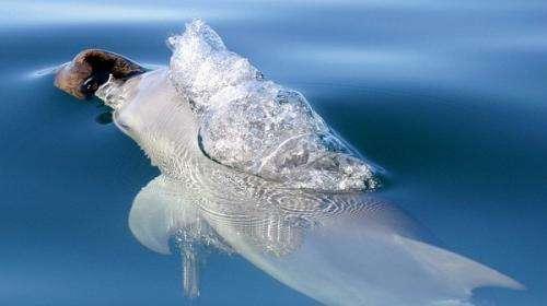 Dolphin food habits distinguish genetic line