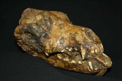 Domestication of dogs may explain mammoth kill sites and success of early modern humans