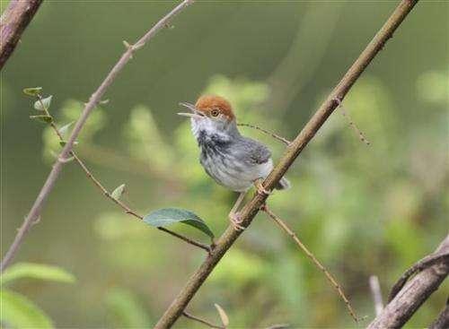 Dozens of new flora, fauna species in Myanmar (Update)