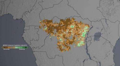 Drought may take toll on Congo rainforest, study finds