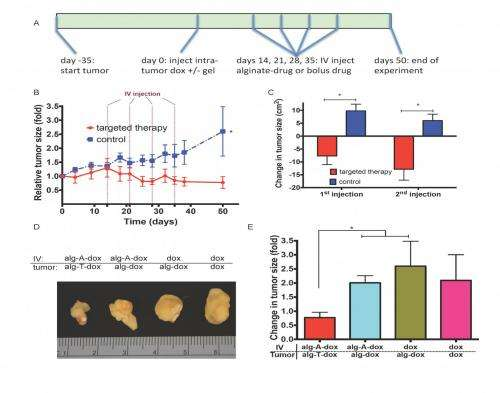 Drug refilling system leads to arrest in tumor growth in vivo