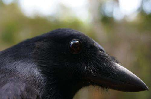 Study shows toddlers can produce a novel action after observing a correlation, while New Caledonian crows cannot