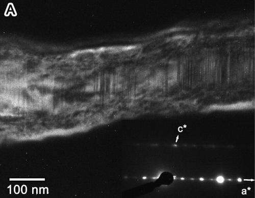 Dust from a comet has been discovered for the first time on the Earth's surface