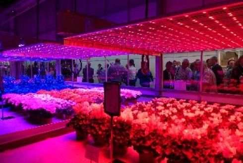 ED lighting can significantly reduce greenhouse horticulture energy consumption