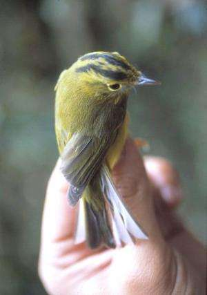 International research group documents unique songbird diversity of the Eastern Himalayas