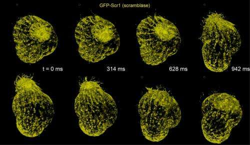 New microscope collects dynamic images of the molecules that animate life
