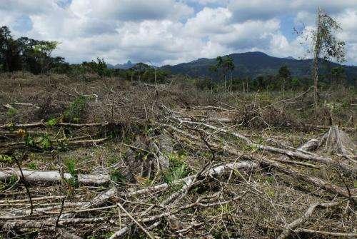 Drug trafficking leads to deforestation in Central America