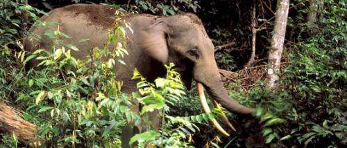 Emergency appeal launched to combat rise in elephant poaching