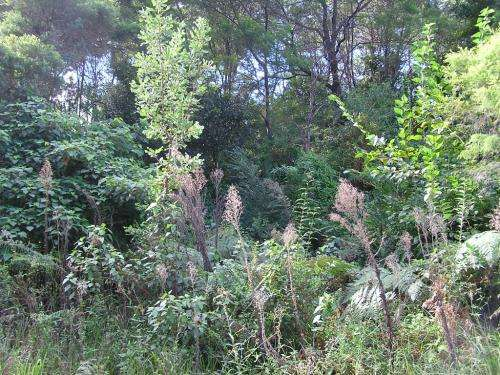 """Enhanced online resource gives land managers """"heads up"""" for invasive plants of Australia's future"""