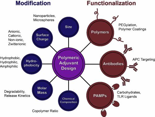 Enhancing the immune response through next generation polymeric vaccine adjuvants