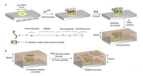 enzyme micropump