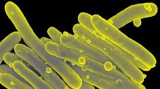 EPFL Joins Forces with Pharmaceutical Company to Fight Tuberculosis