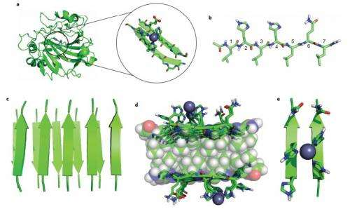 Study shows short peptides can self-assemble into catalysts