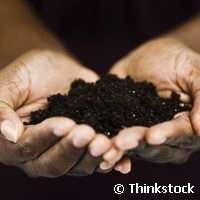 EU-project applies green technologies to decontaminate soil