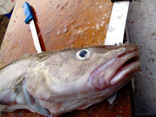 EU warns four more states in fight to end illegal fishing