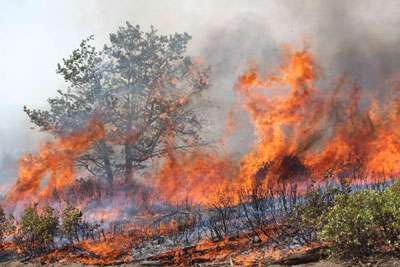 Even in restored forests, extreme weather strongly influences wildfire's impacts