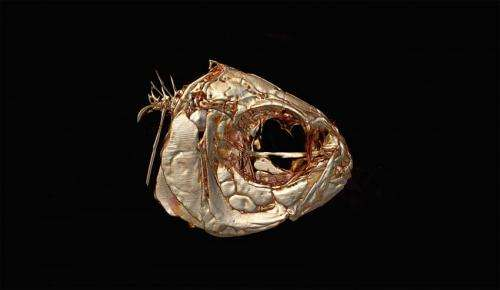 Examination of a cave-dwelling fish finds a possible genetic link to human disorders