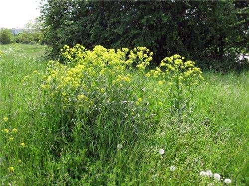 Exotic plant species alter ecosystem productivity