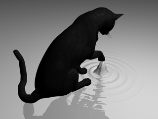 Experiment makes Schrodinger's cat choose—things can be real, or certain, but not both