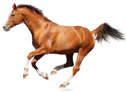 Experts disagree on horses with incoordination