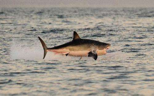 Experts say attacks by sharks are increasing as water sports become more popular