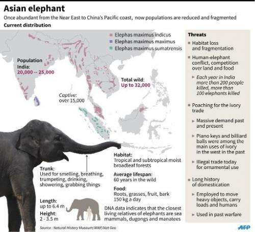 Factfile on Asian elephants