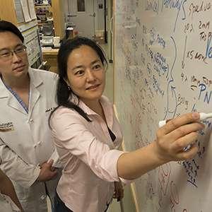 Fatal cellular malfunction identified in Huntington's disease